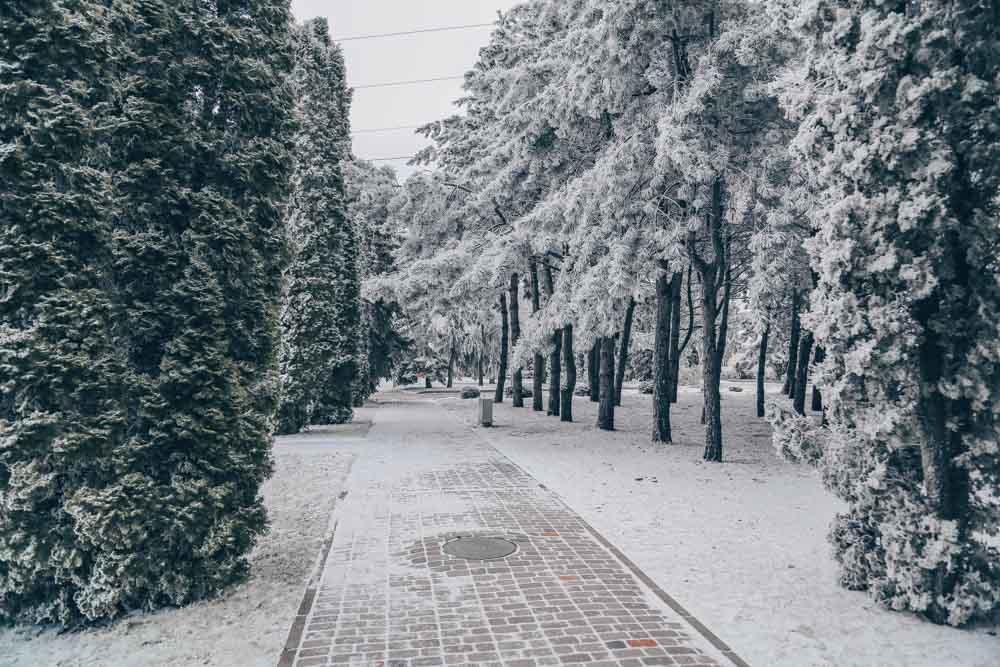 Зимний сквер санатория Русь Ессентуки - фотография